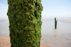 Beach weather coast winchelsea england Stock Photography
