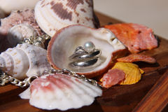 Beach Wedding Rings. Wedding rings inside sea shell. Pearl Stock Photos