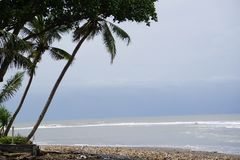 Beach in western Bali Indonesia with palm tree. View Stock Photos