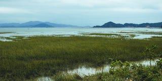 Beach wetland Royalty Free Stock Photography