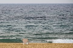 Beach white plastic chair stands on the sand Royalty Free Stock Photos