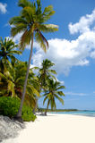 Beach with white sand. Dominican Republic Stock Photos