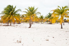 Beach with white sand and palms Royalty Free Stock Photo