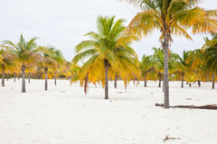 Beach with white sand and palms Stock Photo