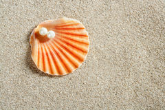 Beach white sand pearl shell clam macro Royalty Free Stock Image
