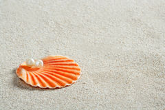 Beach white sand pearl shell clam macro Stock Image