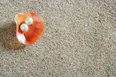 Beach white sand pearl shell clam macro Royalty Free Stock Images
