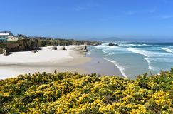 Beach with white sand, rocks and waves. View from a cliff with yellow flowers. Lugo, Spain. royalty free stock photo
