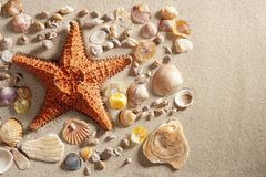 Beach white sand starfish many clam shells summer Stock Image