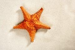Beach white sand starfish summer vacation symbol Stock Images