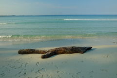 Beach and white sand and wood Stock Images