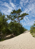 Beach white Sea, Arkhangelsk, Russia Royalty Free Stock Image