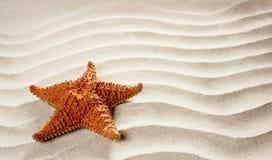 Beach white wavy sand starfish summer vacation. Beach white wavy sand with starfish such a summer vacation symbol Stock Photography