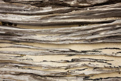 Beach wood log. Texture of wood log on a beach with white sand jammed stock images