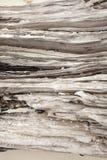 Beach wood log Stock Photography