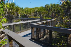 Beach wood walkway with wild plants Royalty Free Stock Photography