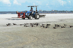 Beach worker cleaning the sand on Fort Myers Beach, Florida. FORT MYERS BEACH, FLORIDA: USA - July 14, 2015: Riding a tractor with a comb attachment at the back Stock Photo
