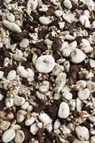 Beach worn rocks and shells Royalty Free Stock Photography