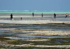 Beach Zanzibar Stock Photos