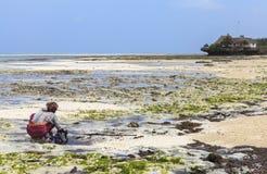 THE BEACH IN ZANZIBAR Royalty Free Stock Photo