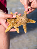 Beachcomber with starfish and shells Stock Image