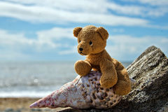 Beachcomber Teddy Royalty Free Stock Photos