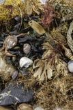 Beachcombing Assortiment d'espèce marine et de débris images libres de droits