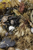 Beachcombing. Assortment of marine life and debris Royalty Free Stock Images