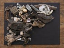 Beachcombing, encontrou objetos incluir as garrafas velhas, rejeitadas pescando a atração e objetos naturais bonitos foto de stock royalty free
