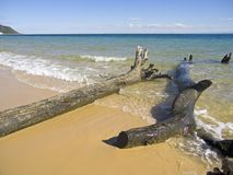 BeachDebri. Fallen trees washed up on beach Stock Images