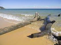 BeachDebri Stock Images