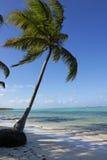 beache Δομινικανή Δημοκρατία στοκ φωτογραφίες