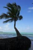 beache Δομινικανή Δημοκρατία στοκ εικόνα με δικαίωμα ελεύθερης χρήσης