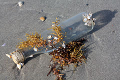 Beached Bottle 2. Beached bottle and shells Florida stock photography