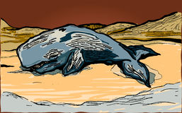Beached Whale. A vector illustration of a whale stranded out of water Royalty Free Stock Photos