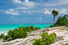 Beaches of Mexico. Scenic shot of a beach in Tulum Mexico royalty free stock photo