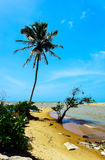 Beaches in Sri Lanka Royalty Free Stock Image