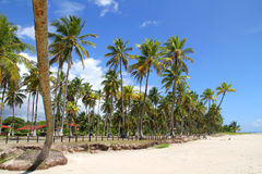 Beachfront in Bahia Royalty Free Stock Photography