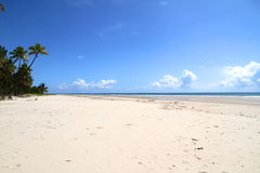 Beachfront in Bahia Stock Image