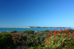 Beachfront garden in Bay View, Hawkes Bay, New Zealand Stock Image