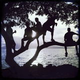 Beachfront Sunset Silhouette of 5 Guys in a Tree Stock Photos