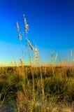 Beachgrass bij Eiland II van Wittebroodsweken Royalty-vrije Stock Afbeeldingen