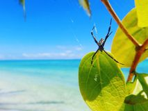 Beachin& x27; Spider. Spider at the beach Nature Blue water stock photography