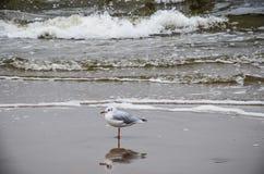 Beachlife Στοκ Εικόνες