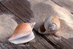 Beachlife met seasnails op doorstaan hout Stock Fotografie
