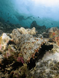 Beachs de Maldiven Royalty-vrije Stock Afbeelding