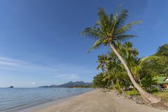 Beachside with coconut tree, Koh Chang, Thailand. Beachside with coconut tree, Koh Chang Thailand stock photo