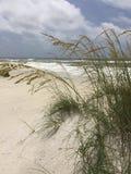 BeachSide. Distant ocean viewed through sea Royalty Free Stock Photo