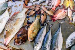 Beachside fish stall in Thailand. Beachside fish stall with various species of fish displayed at Rawai beach seafood market in Phuket, Thailand stock images