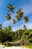 Beachside palm trees against blue sky. Palm trees against blue sky on beach in southern Thailand Royalty Free Stock Images